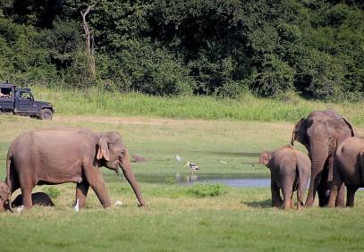 7 Day Chief's Island & Chobe National Park Family Safari