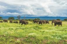 Kenya Luxury Experience