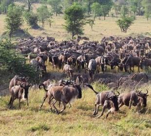 4-Day Northern Circuit Safari