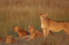 8-Day Tanzania Holistic Safari