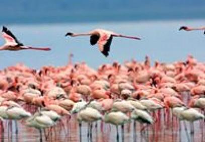 4-Day Mara & Nakuru Budget Camping Safari