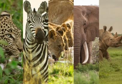 Kenya Ultimate Big Game Safari
