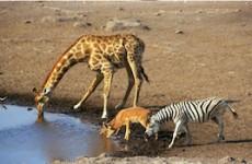 Kruger, Lesotho & Swaziland Group Tour
