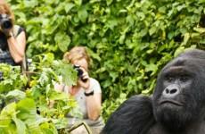 3-Day Gorilla Trekking Safaris