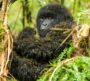 3-Day Gorilla Trekking in Bwindi