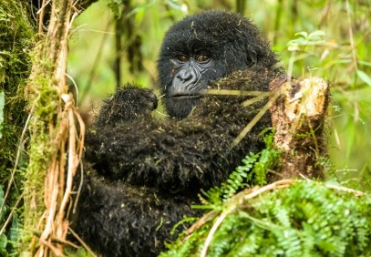 3-Day Gorilla Trekking in Bwindi