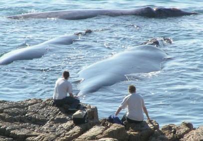 Cape Town Whales & Garden Route