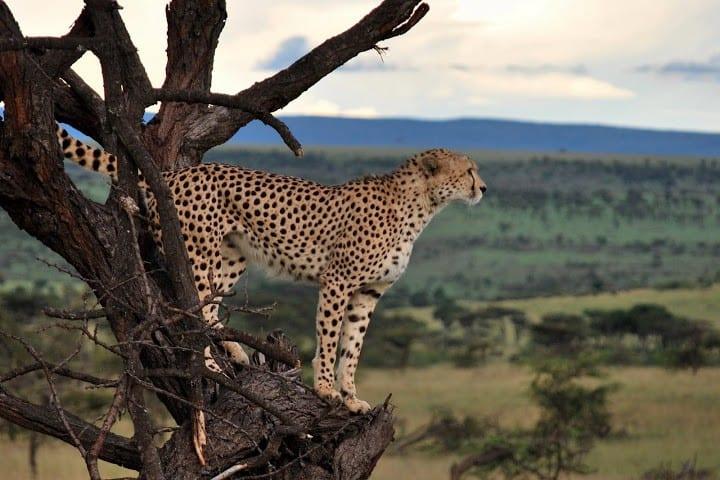 Classic Kenya Blissful Adventure