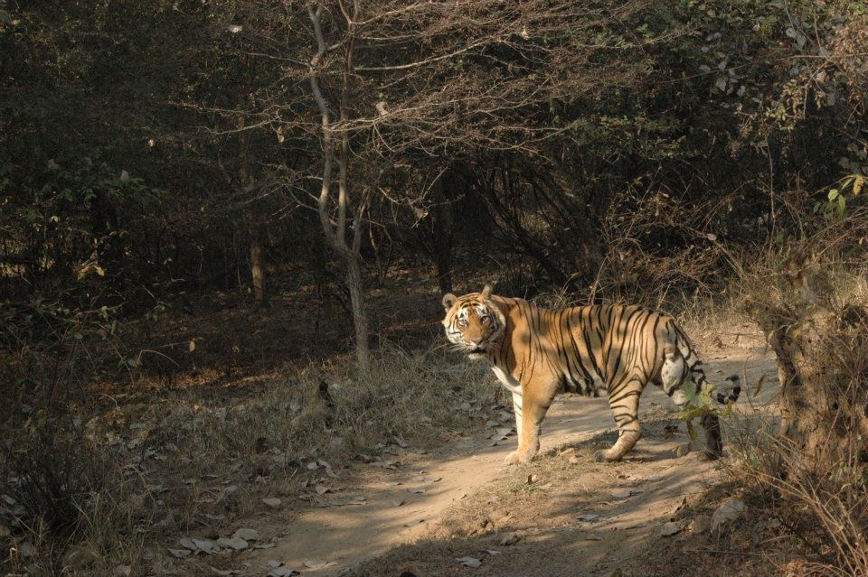 Jaipur Ranthambore National Park 50 (1)
