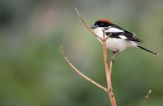 Bird Watching in Jordan