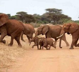 6 Day Kenya Budget Safari