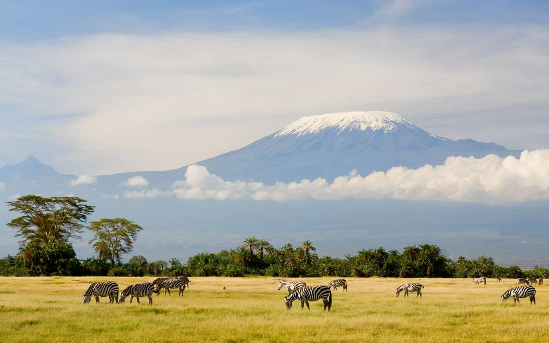 Kilimanjarozebra