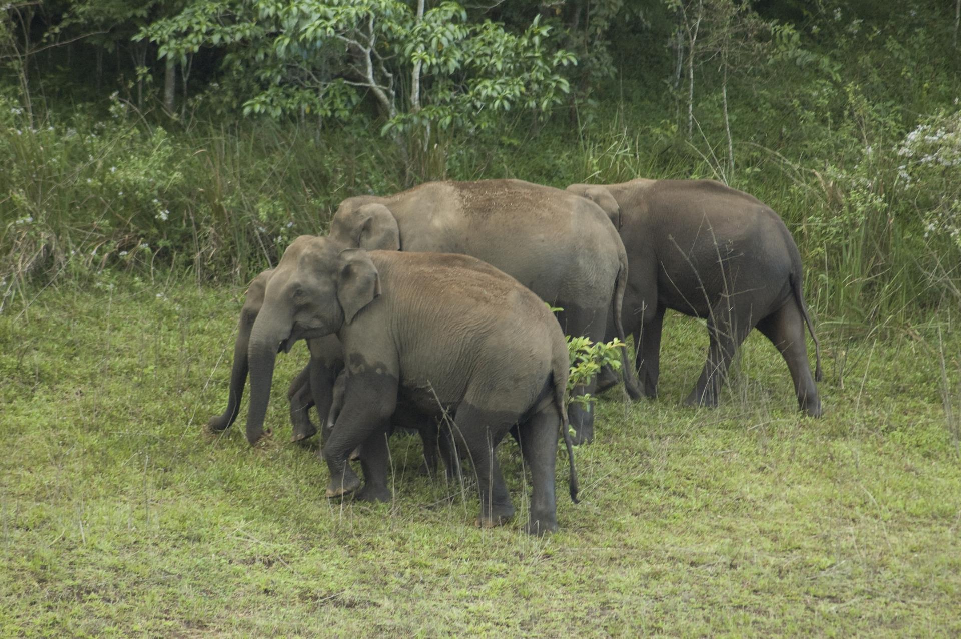 Kochi Periyar Thekkady Wildlife Sanctuary 11