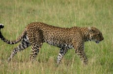 Classic Kenya Wildlife Safari