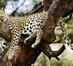 10-Day Kenya Photographic Safari