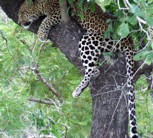 12-Day Kenya and Tanzania Budget Group Safari