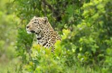 Safari Adventure in Los Llanos