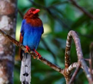 Wild World Of Sri Lanka II