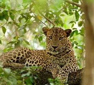 Wild Sri Lanka In A Nutshell