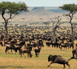 7-Day Maasai Mara Great Wildebeest Migration