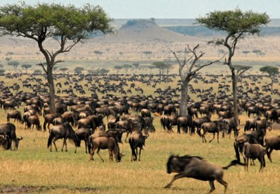 7-Day Maasai Mara Great Wildebeest Migration
