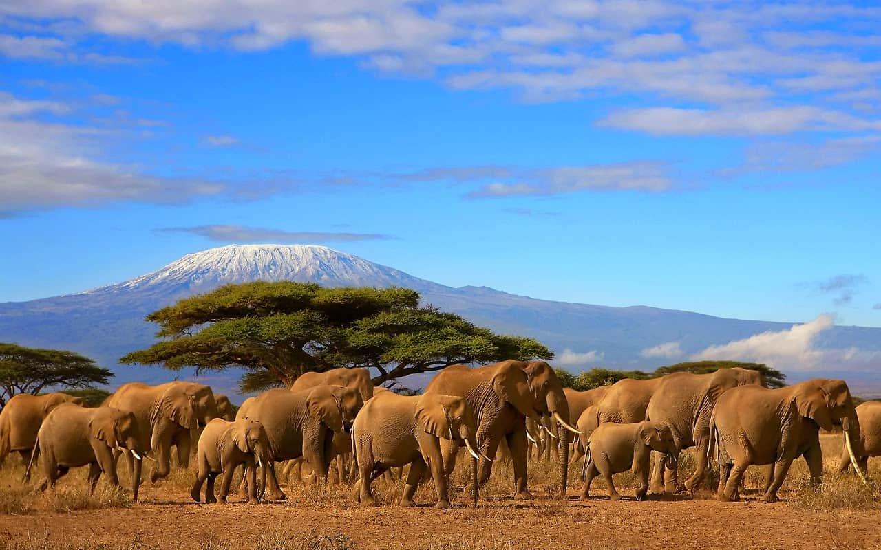 Mt.kili