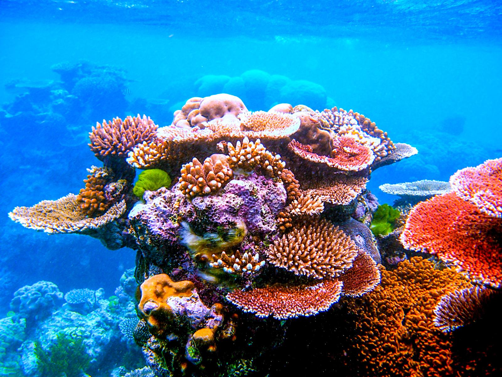 Ocean Safari Bookings