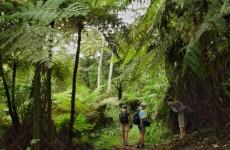 Cameroon Dja Biodiversity Safari