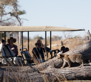 7 Day Family Safari in Botswana