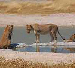 7-Day Pride of Namibia Camping Safari