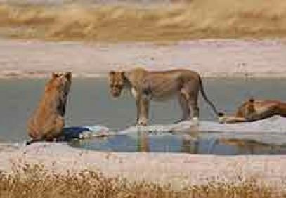 7-Day Pride of Namibia Camping Safari