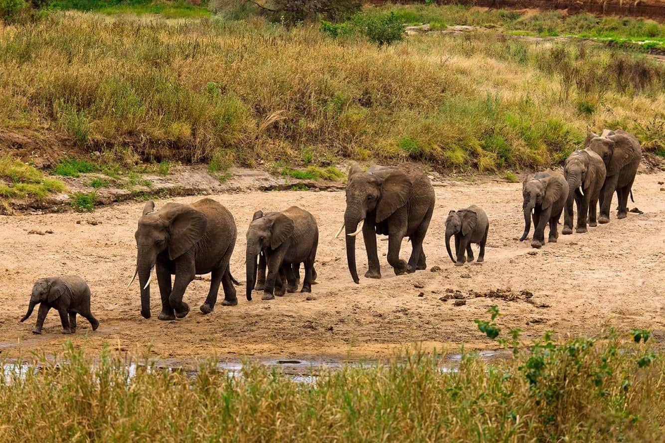 Tarangire Safariz