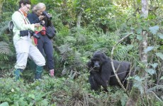 5-Day Bwindi Gorilla Trek and Queen Elizabeth Safari