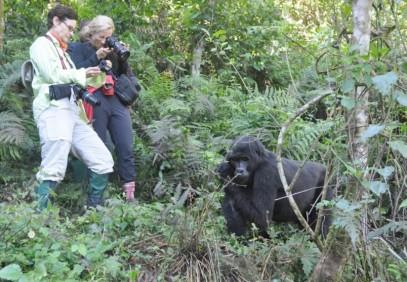 5-Day Bwindi Gorilla Trek and Queen Elizabeth Safari