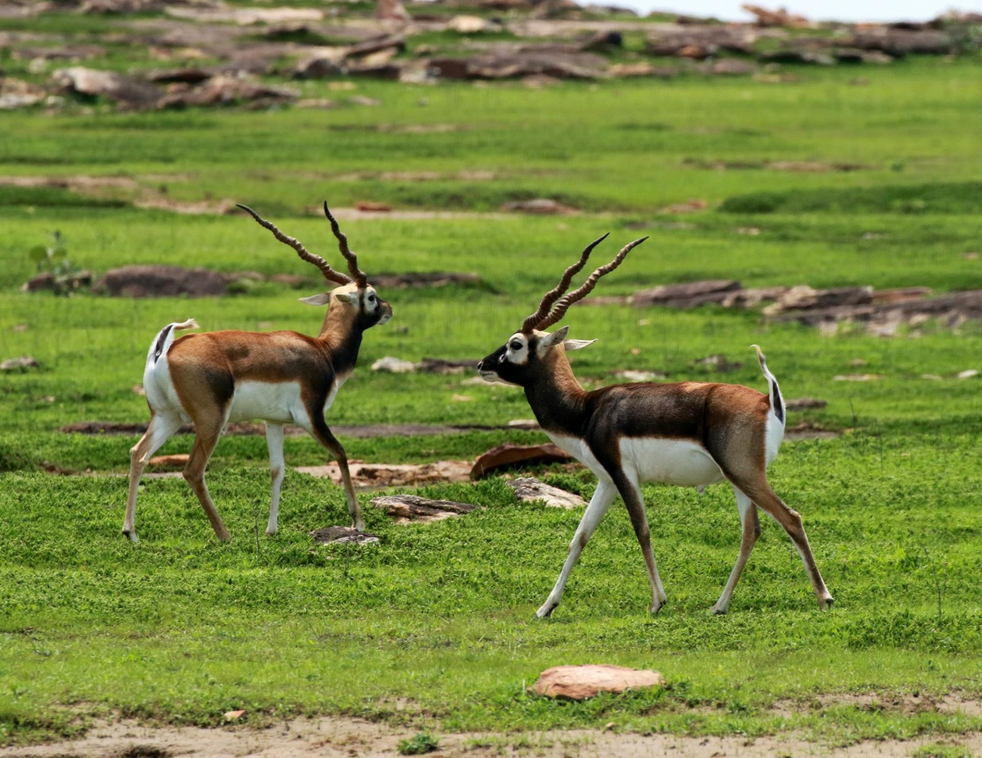 Varanasi Kaimur Wildlife Sanctuary 30