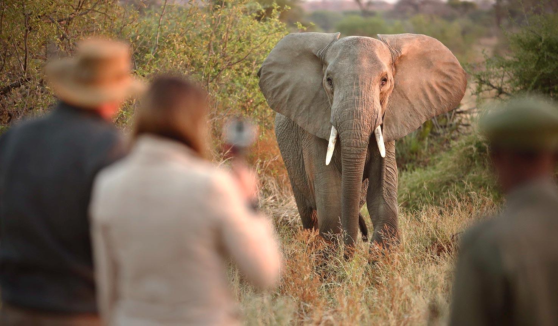 Walking Safari Mfnp