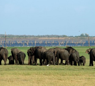 The Big Trip: Wild World of Sri Lanka IV