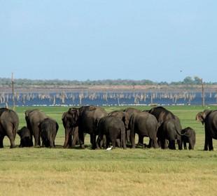 The Big Trip: Wild World of Sri Lanka IV