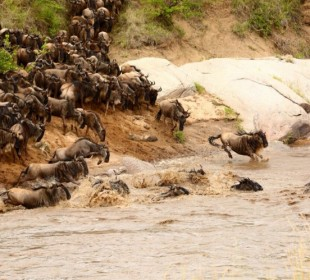 3-Day Masai Mara Safari