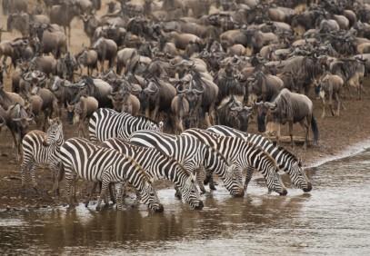 7-Day Great Migration Tanzanian Safari