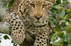 Wildlife Photography and Conservation