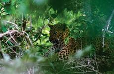 Wildlife Photography Tour Of Sri Lanka