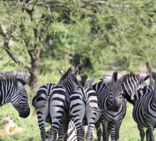 6-Day Uganda Wildlife Safari with Gorillas