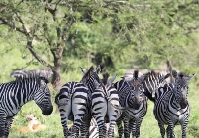 6-Day Uganda Wildlife Safari with Gorillas