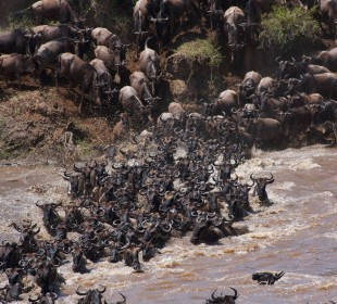 5-Day Tented Lodge Safari To See Great Migration