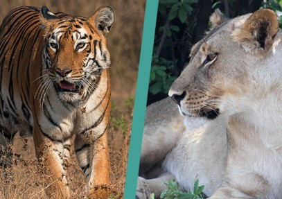 World's Top Spots to see Big Cats