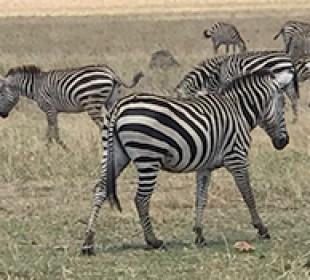 6-Day Tarangire, Serengeti, Ngorongoro Crater, Manyara & Arusha Safari