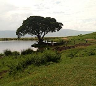 7-Day Tarangire, Serengeti, Ngorongoro Crater, Arusha & Lake Manyara Safari