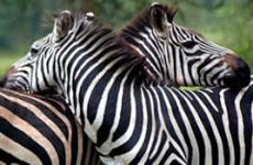 Kidepo Valley National Park Uganda