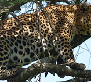 3-Day Masai Mara Group Safari